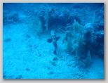 Secche di Tor Paterno -  una cernia bruna femmina