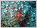 Promontorio dell'Argentario: una stella marina