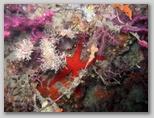 Promontorio dell'Argentario: una stella marina.