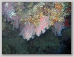 Promontorio dell'Argentario: Scoglio del Corallo.