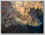 Isola d'Elba: coralli alle Coralline