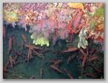 Isola d'Elba: corallo alle Coralline Interne.
