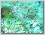 L'isola di Giannutri: un nudibranco.
