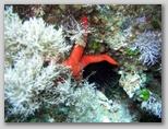 L'isola di Giannutri: una stella marina..