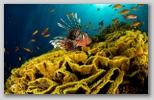 I colori del Maro Rosso
